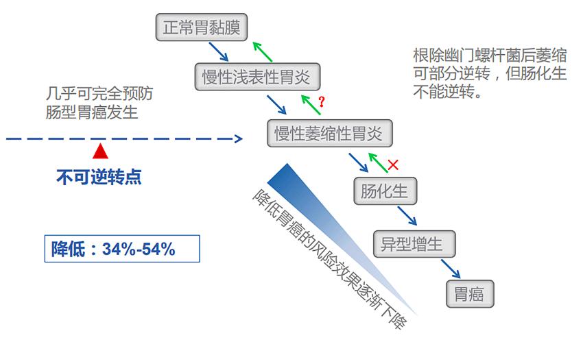 【卫之幽】益生菌产品功能与幽门螺杆菌介绍