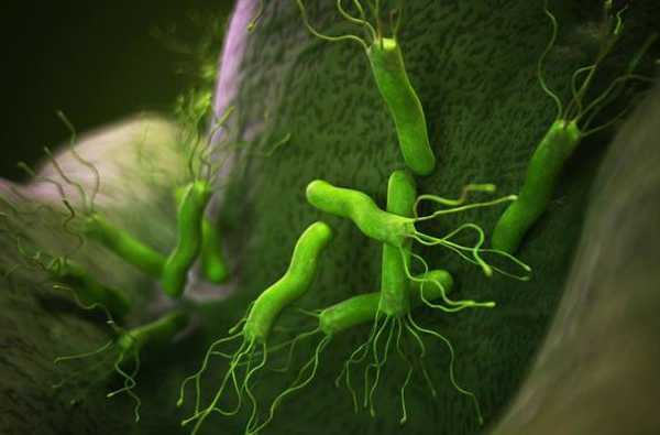 卫之幽分享:幽门螺旋杆菌的最全科普知识!